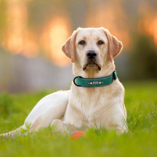 Dog Collars, Dog Harness Dog leashs